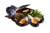 Shellfish, Clams, Mussels