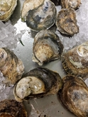 Shucked Blue Point Oysters